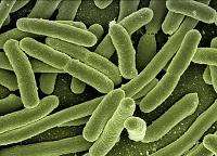 sol antibactérien